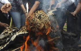 animals in the news with a vladimir putin cameo   the atlantic a leopard skin burns as indian officials and activists burn wildlife contraband including tiger and leopard skins and bones as part of a campaign to save
