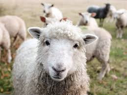 Leather, Wool, and Other Clothing Made From <b>Animals</b>   PETA