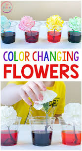 <b>Color</b> Changing <b>Flowers</b> Science Experiment