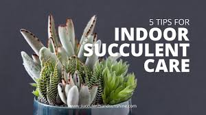 Indoor <b>Succulent</b> Care: 5 Tips for keeping your indoor <b>succulents</b> ...
