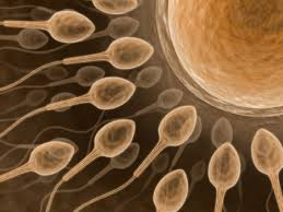 ASSISTED REPRODUCTION