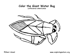 Small Picture Water Bug Coloring Page