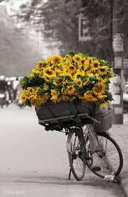 27 Best <b>Sunflowers Yellow</b> - Traditional Dark centers images ...