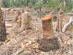 soil erosion essaydeforestation and degradation of forests   essay deforestation and degradation  soil erosion essay
