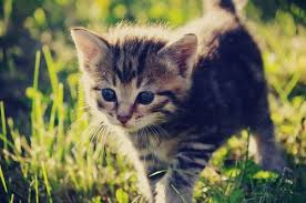 cute cats =) Images?q=tbn:ANd9GcSMg1fKS_WjMLLg4FcQgZjtDCq8eOOLEw4dTPpCoLjfvAn1Be8EkA