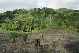deforestation tag newshour reaches highest deforestation rate in the world