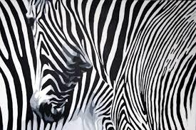Zebra Art | Zebra art, Animal print rug, Art for sale