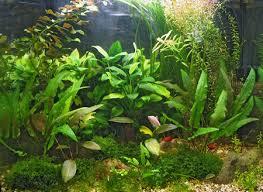 Аквариумные <b>растения</b> без проблем