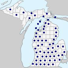 Festuca subverticillata - Michigan Flora