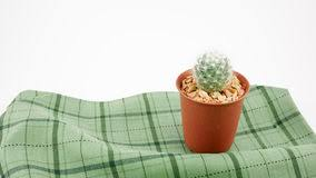 Image result for green cactus