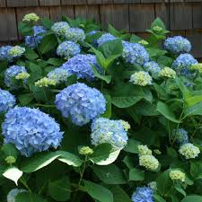 Image result for shade plants