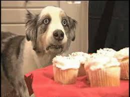 Cupcake Dog | Know Your Meme via Relatably.com