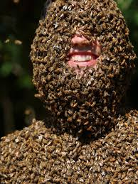 Image result for huge bee stinging person