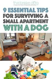 dog door pinterest patio pet do you share a small apartment with a dog it doesnt have to