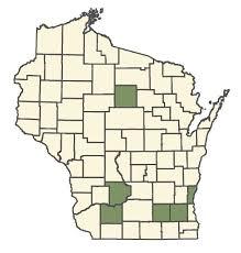 Rudbeckia fulgida var. speciosa - Online Virtual Flora of Wisconsin