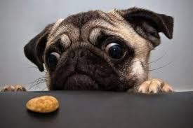 Image result for animals and diet funnies
