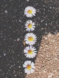 Image result for images of flowers tumblr