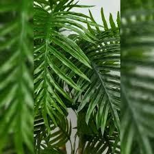 <b>Пальма</b> для вашего офиса или дома, а... - My-Florist ...