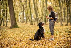 <b>Dog Training Supplies</b> and Tools