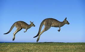 Hasil gambar untuk hewan bergerak di darat