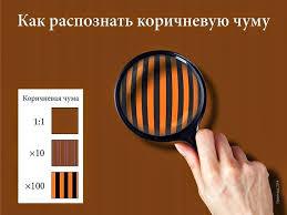 Власти белорусского Бреста запретили использование георгиевских лент в общественном транспорте - Цензор.НЕТ 2694