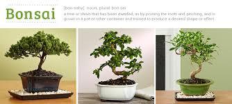 bonsai tree tips bonsai tree office table