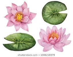 <b>Lotus Leaf Flower</b> Images, Stock Photos & Vectors   Shutterstock