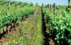 organic farming uk