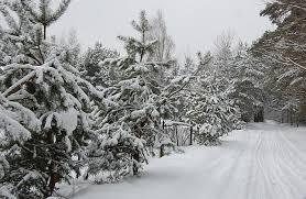 Znalezione obrazy dla zapytania spacer zimą