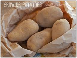 good things blog good things its history goes back to the early days of man a past spanning feast and famine potatoes were discovered by pre inca