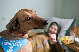 Картинки по запросу собаки-терапевты