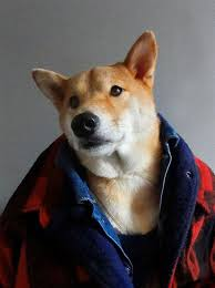 Blizzard Ready #mensweardog #menswear #<b>dog</b> #<b>fashion</b> #<b>shiba</b> ...