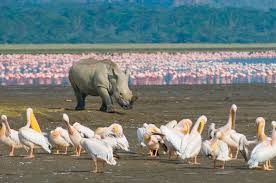 Image result for photos of Ndere national park in Seme