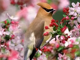 Resultado de imagen de poesía de la primavera besaba