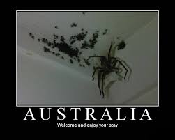 Scientific Scribbles » Australian Spiders, They're not so Bad via Relatably.com