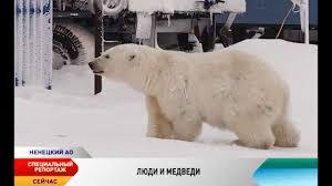 Люди и <b>белые медведи</b> - YouTube