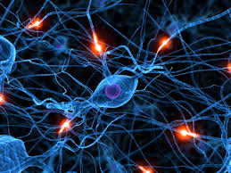 Funcionamiento cerebral