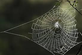 Image result for sarang labah labah
