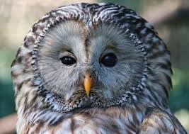 900+ <b>Owl</b> Images: Download HD Pictures & Photos on Unsplash
