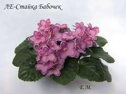 ЛЕ-<b>Стайка Бабочек</b> - Форум цветоводов Фрау Флора