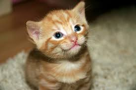 Image result for cat urine carpet