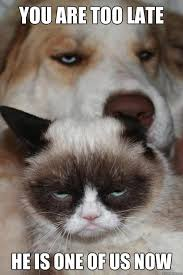 GRUMPY CAT!!!!!!!! on Pinterest | Grumpy Cat Meme, Meme and Funny ... via Relatably.com
