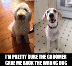 Well-Groomed | Darwin Dogs via Relatably.com