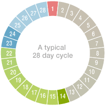 Image result for menstruation cycle calendar