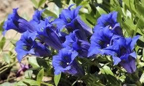 Plante de Martine 10 avril trouvée par Ajonc Images?q=tbn:ANd9GcSRI34gVXWyBWaBa-i8nDtfJ8qCu55XVJkbNMkQ5jM4-So2FBtL