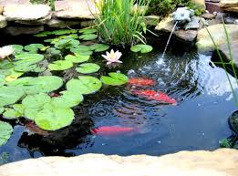diy patio pond: relaxing diy outdoor ponds diy decorations