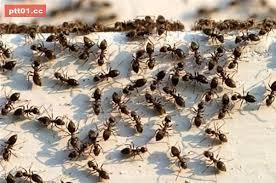 「螞蟻」的圖片搜尋結果