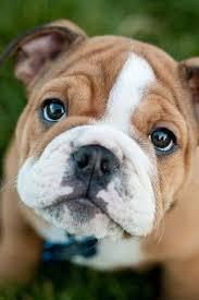 Dogs: лучшие изображения (710) в 2019 г.   <b>Собаки</b>, Животные и ...