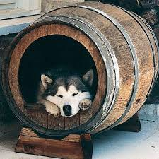 images about Dog House on Pinterest   Dog Houses  Dog House       images about Dog House on Pinterest   Dog Houses  Dog House Plans and Cool Dog Houses