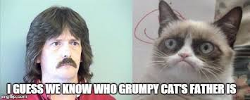 Grumpy Cats Father Memes - Imgflip via Relatably.com